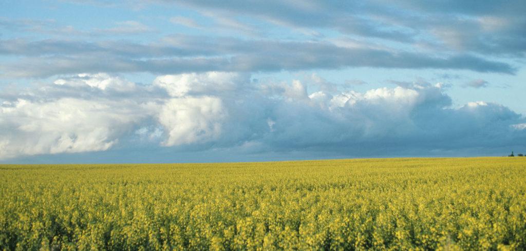 中共中央 国务院关于全面推进乡村振兴加快农业农村现代化的意见